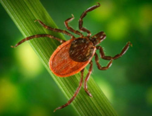 Is Lyme Disease Related To Morgellons Disease?